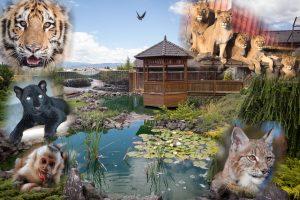 Wildpark Resort
